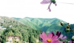 オリンパスOM20で和歌山を撮った写真