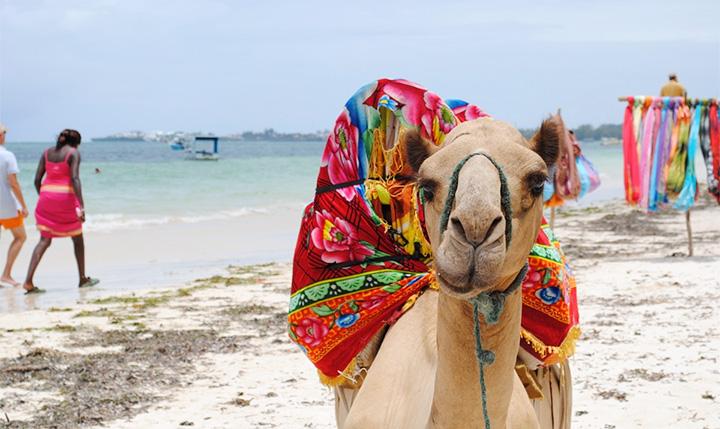 ケニア年末旅行の観光情報下調べ (黄熱病や気候、服装など)