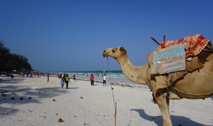ケニア旅行なら超おすすめ!ディアニビーチ情報。服装や蚊対策など (ケニア旅行記7)